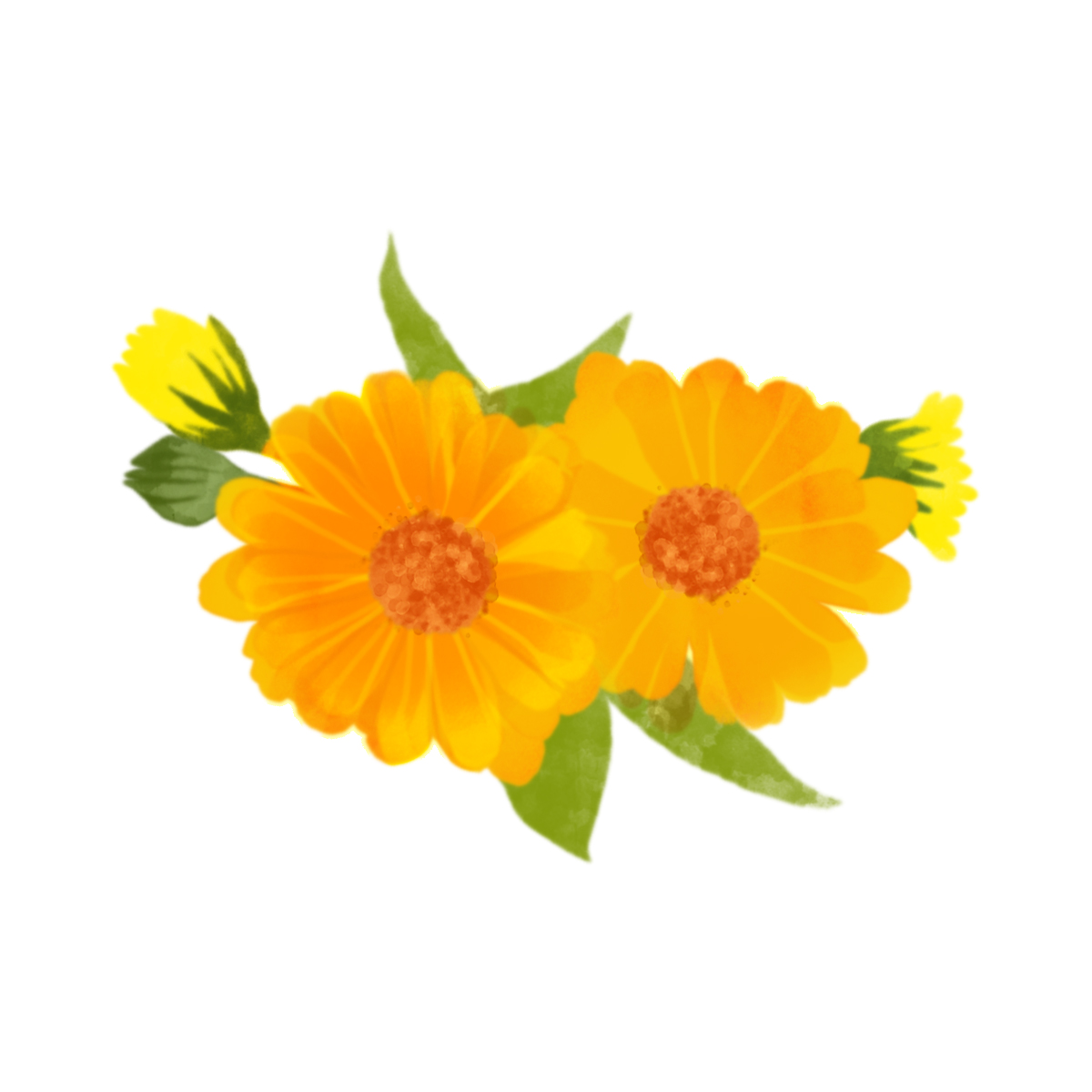 Picture for Calendula